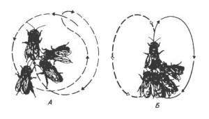 Сигнализация у пчёл