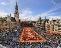 Цветущий ковер Брюсселя
