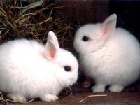 Евросоюз запретил ввоз косметики, тестируемой на животных
