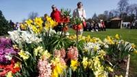 Цветочный Биг-Бен и Тауэрский мост создают английскую атмосферу в Нидерландах