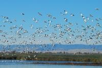 Орнитологи со всей Европы приехали в Австрию за птицами