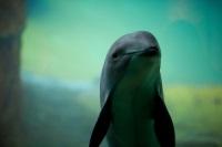 Могут ли морские свиньи мирно сосуществовать с человеком? Ответ ищут 8 стран