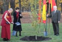 Нобелевское дерево мира посадили в Варшаве
