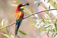 Новая премия Европейской Комиссии привлекает внимание к сохранению биоразнообразия в Европе