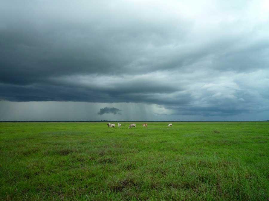 Окружающая среда – самое популярное направление научных исследований среди «непрофессионалов»