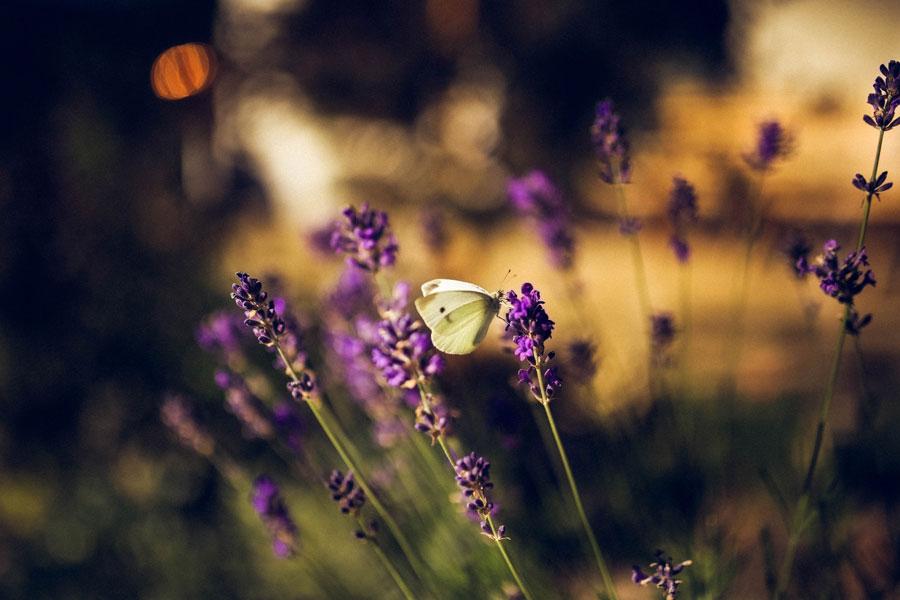 В финские леса мигрировало более 100 видов южных насекомых