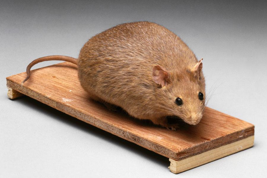 Испанские ученые нашли белок, который мешает худеть