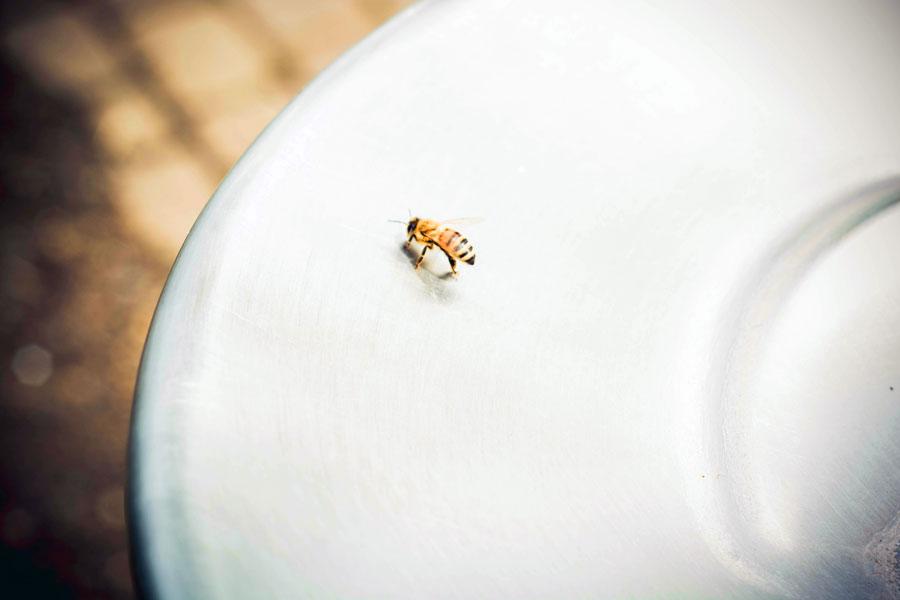 Пчелы в Южной Богемии стали предпочитать цветам конфеты