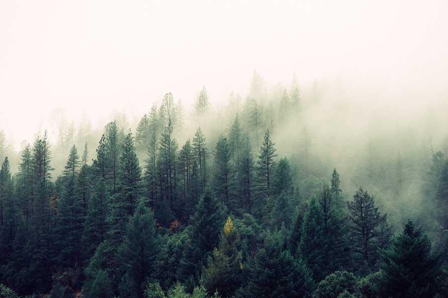 Чешский лес поможет специалистам NASA изучить природу глобального потепления
