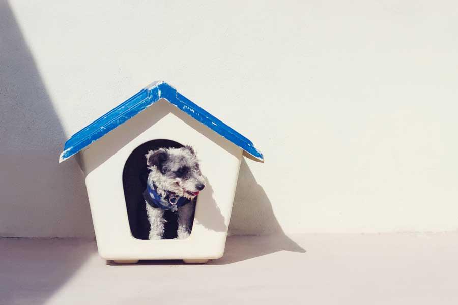 Датский предприниматель планирует построить жилье только для хозяев собак