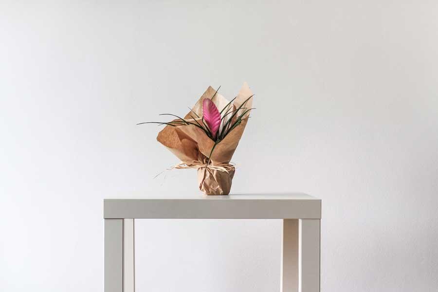 Упаковка для свежих цветов без воды и технология переработки бумажных стаканов — названы победители конкурса экологичной упаковки