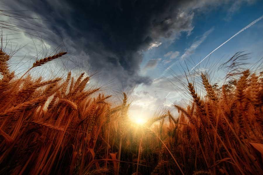 Европейский проект органического земледелия позволил фермерам увеличить прибыль в 6 раз