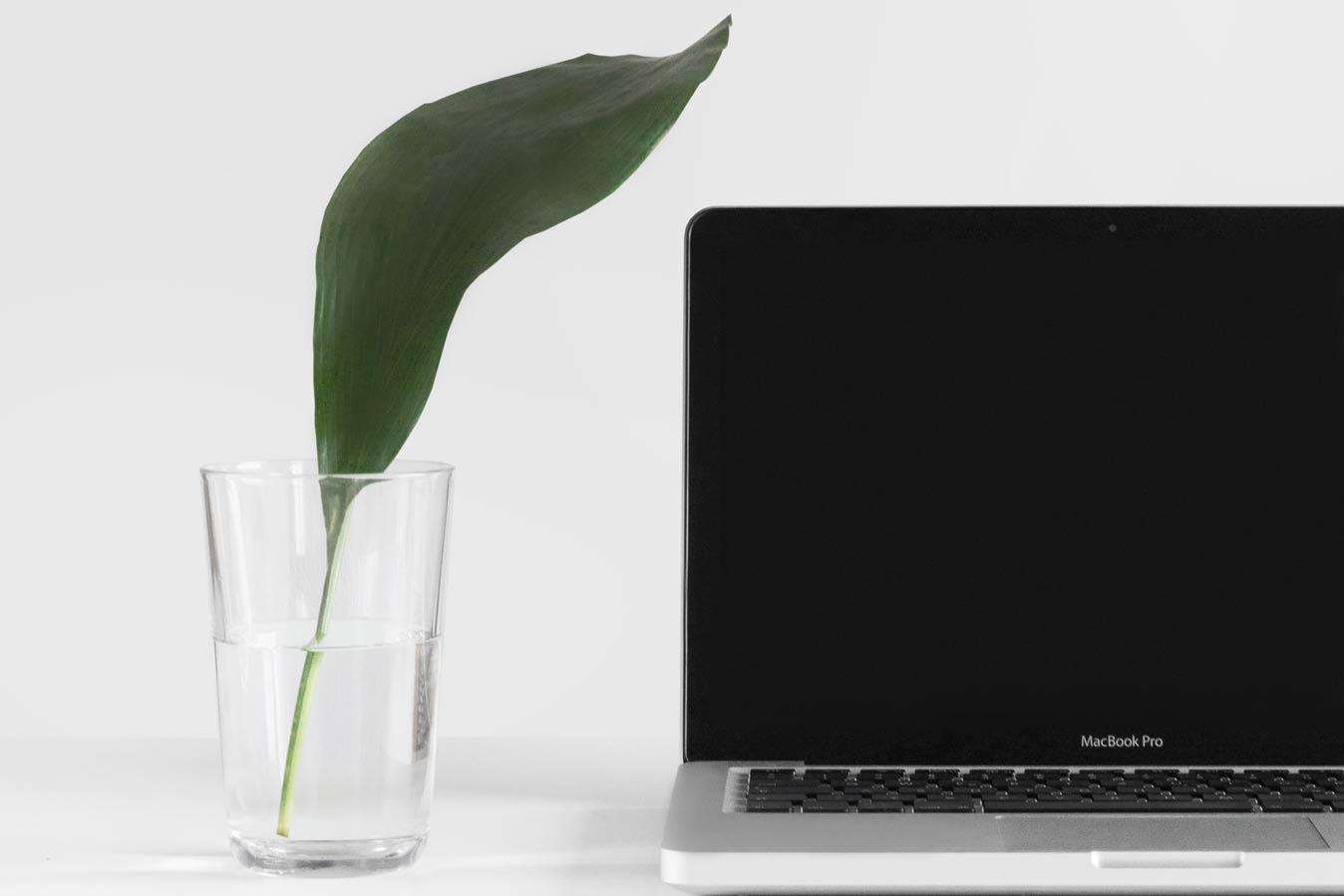 Экологичность почти половины «зеленых» товаров в онлайн-торговле не доказана – итоги проверки Евросоюзом сайтов на «гринвошинг»