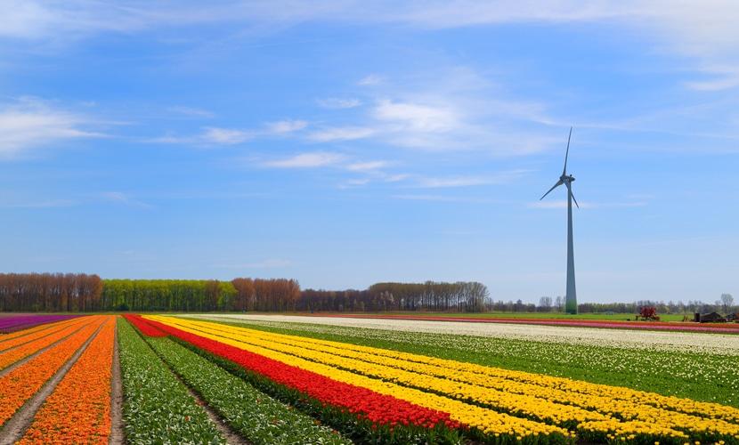 Campos de Tulipa nos Países Baixos