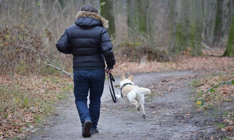 cuidador de cachorro