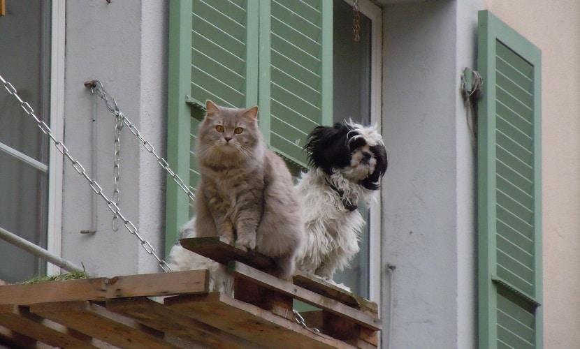 leis animais Suíça