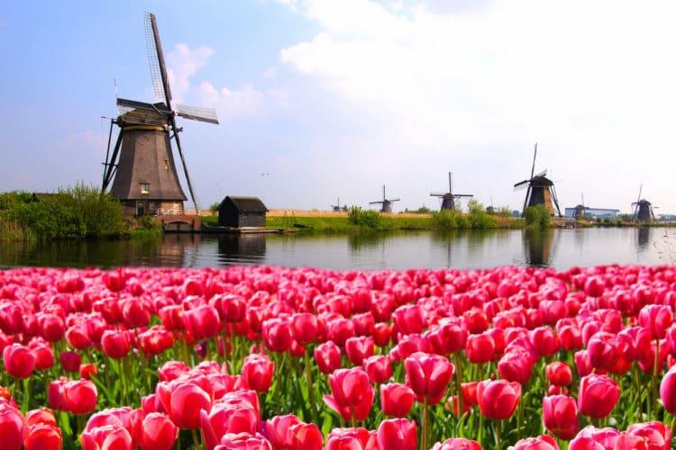 holanda campo de tulipas