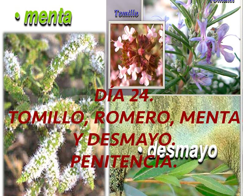 DÍA 24. TOMILLO, ROMERO, MENTA Y DESMAYO. PENITENCIA.