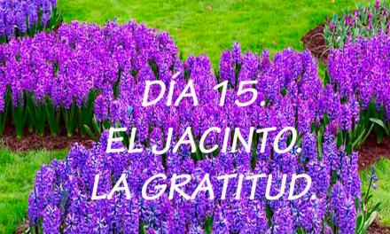 DÍA 15. EL JACINTO. LA GRATITUD.