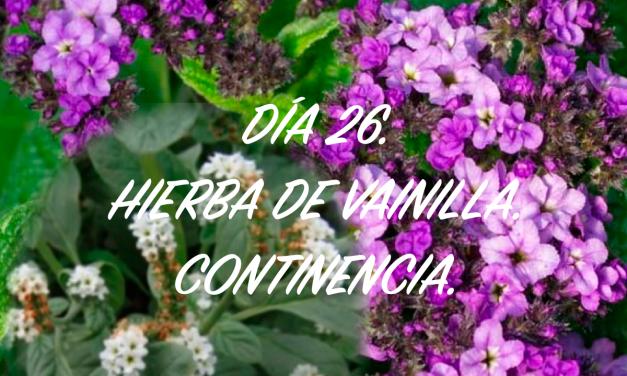 DÍA 26. HIERBA DE VAINILLA (HELIOTROPO). CONTINENCIA.