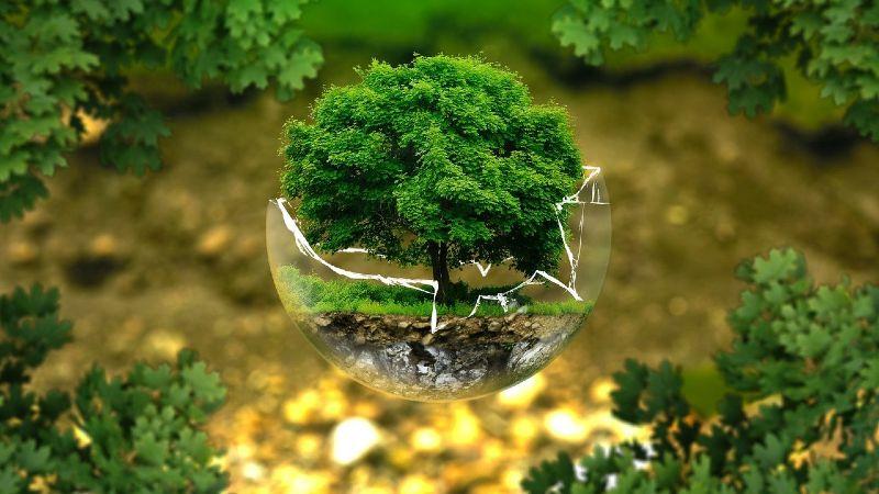 Regalos publicitarios ecológicos