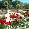 バラの花が満開になるJardines del Real Viveros