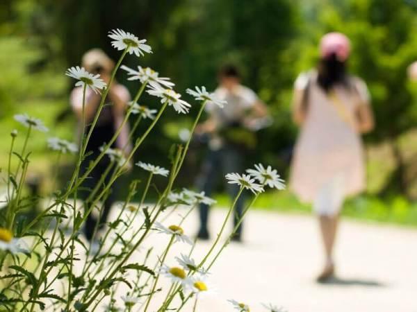 flower-park
