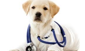 Doctor Guau