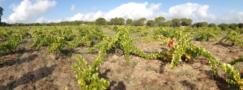 FGN vineyard Madrid