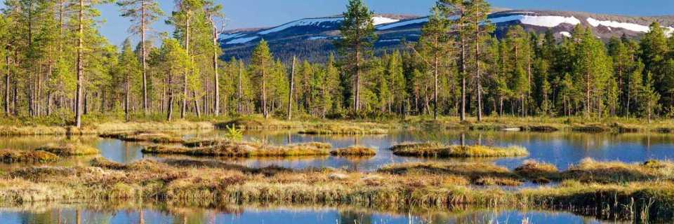 Fulufjället Wilderness