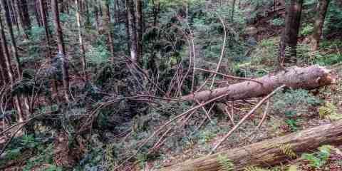 Chornyy Dil Wilderness