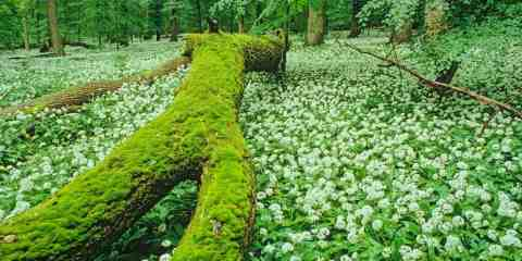 Hainich WILDForest