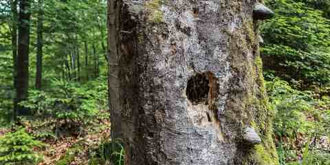 Kalkalpen WILDForest