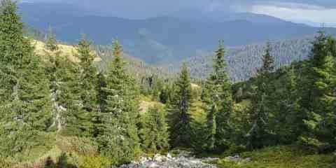 Maramarosh Wilderness