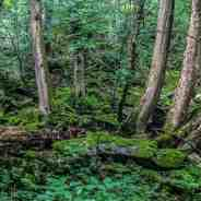 Adapting Sustainable Forest Management to Climate Change