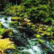 Fulufjället Wilderness – New Publication!