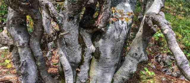 Newest member to European Wilderness Network – Velino Wilderness, Italy
