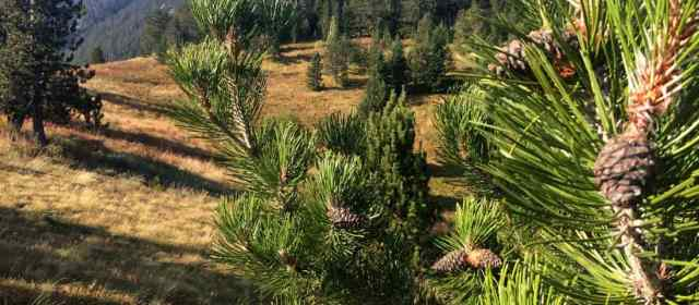 Next in Bulgaria: Potential Wilderness Ali Botush