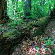 Forests and Wilderness crucial in the climate change combat