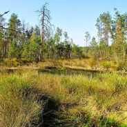 Importance of peat bogs as CO2 storage