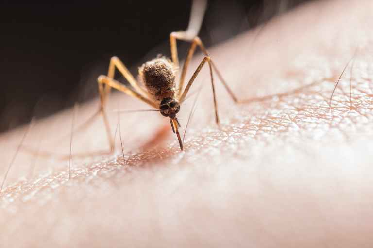 Corona weltweit: Mücke sticht Haut