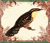 Slovenia - Superstitions - Cuckoo
