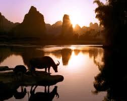 Vattenbuffel i solnedgång från Fakta om Kina