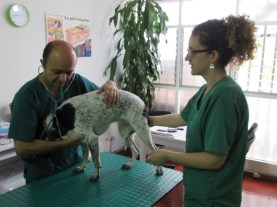 Cardiología Veterinaria