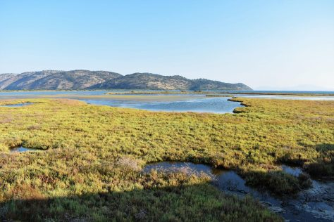 Marshlands and lagoon of Butrint National Park in Albania