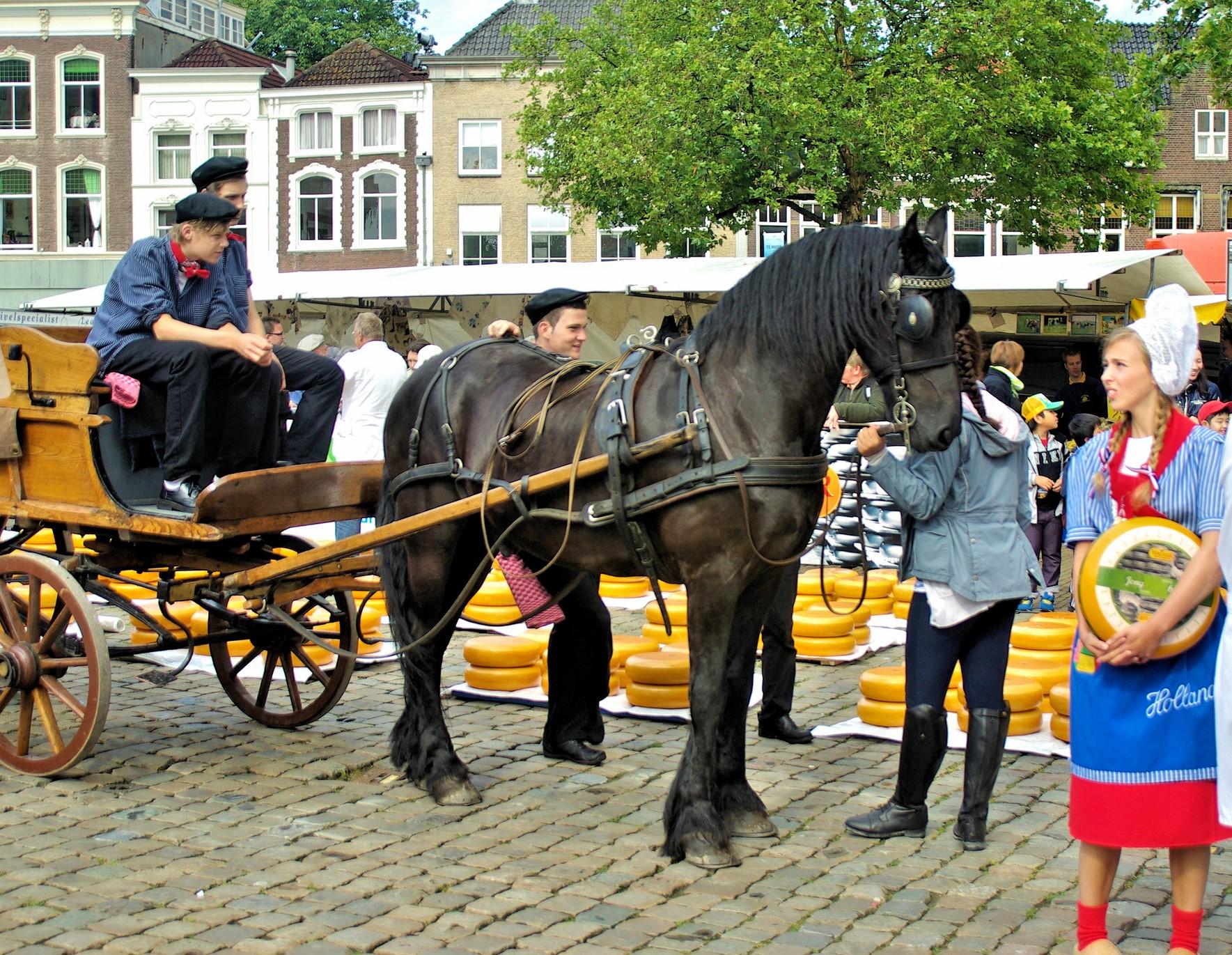 Traditional Gouda cheese market