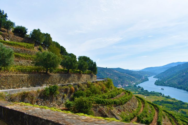 Panoramic road along the Douro Valley terraced vineyards