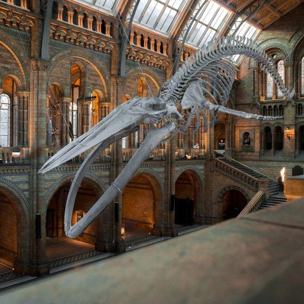 Colección: Los Mejores Museos Gratis de Londres!