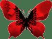 Albanie-papillon