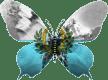 Saint-Marin-papillon